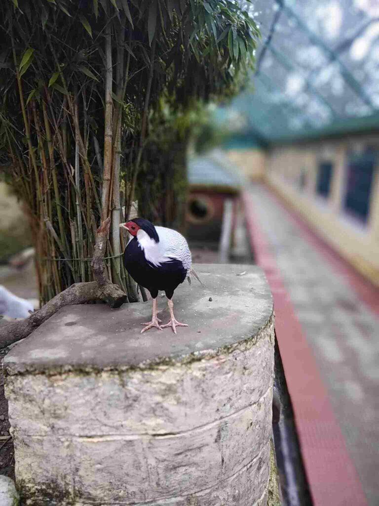 himachal birds park